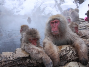 From/To Nagano City: Snow Monkey Private Tour