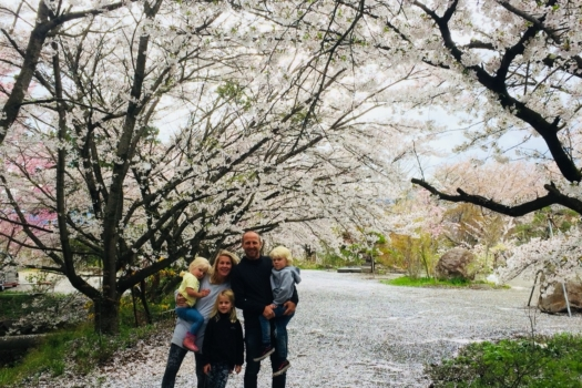 【Only Apr. 5 – 25】Snow Monkeys & Cherry Blossoms