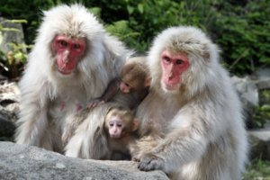 Aug 14th Only: Azumino Fireworks Festival & Snow Monkeys