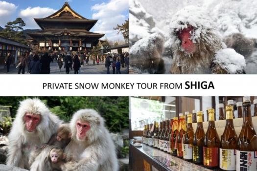 From/To Shiga Kogen: Snow Monkey Private Tour