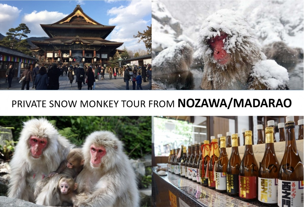 From/To Nozawa/Madarao: Snow Monkey Private Tour